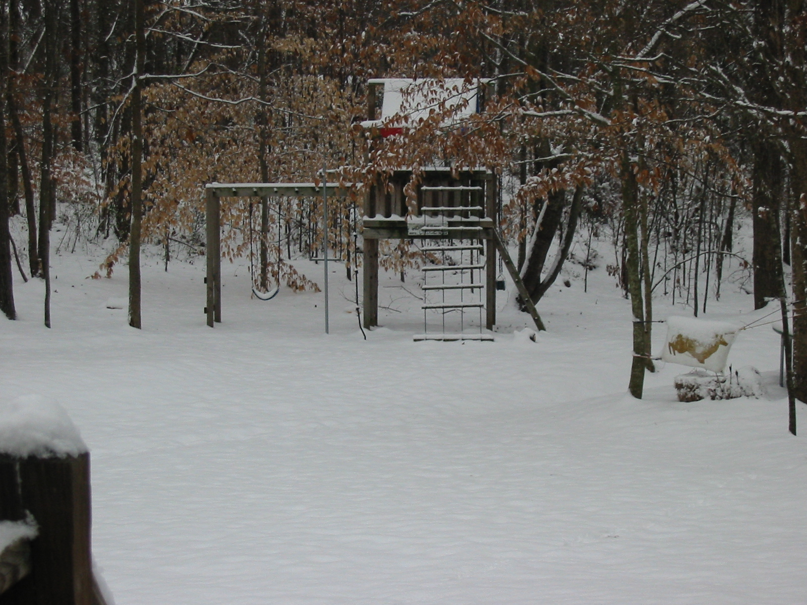 Snow Scene (backyard)